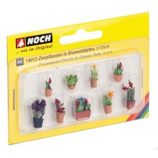Okrasné rostliny v květináčích