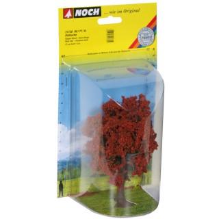 Buk červený - 14 cm 21730