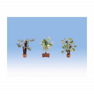Středomořské rostliny 3ks  NO14023